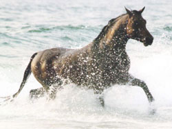 Horse running in river